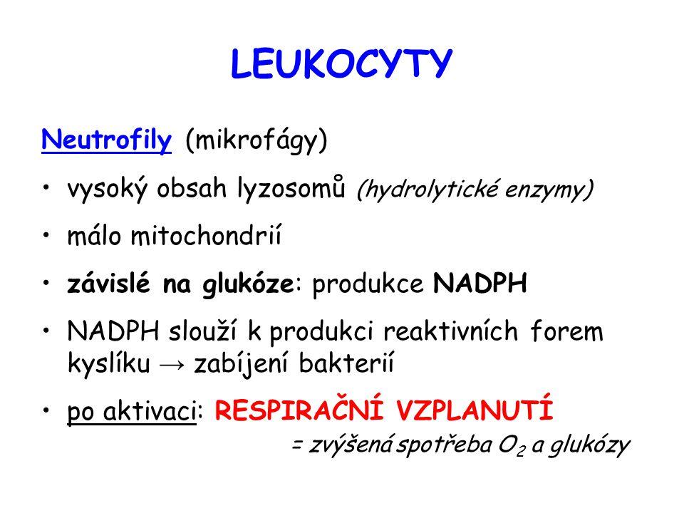 LEUKOCYTY Neutrofily (mikrofágy) vysoký obsah lyzosomů (hydrolytické enzymy) málo mitochondrií závislé na glukóze: produkce NADPH NADPH slouží k produ