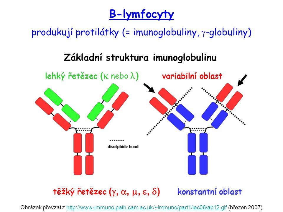 Obrázek převzat z http://www-immuno.path.cam.ac.uk/~immuno/part1/lec06/ab12.gif (březen 2007)http://www-immuno.path.cam.ac.uk/~immuno/part1/lec06/ab12