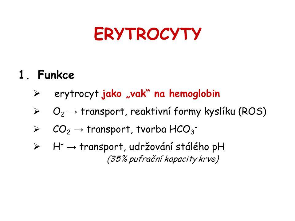 """ERYTROCYTY 1.Funkce  erytrocyt jako """"vak"""" na hemoglobin  O 2 → transport, reaktivní formy kyslíku (ROS)  CO 2 → transport, tvorba HCO 3 -  H + → t"""