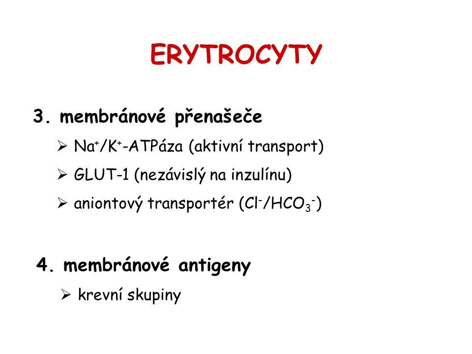 ERYTROCYTY 3. membránové přenašeče  Na + /K + -ATPáza (aktivní transport)  GLUT-1 (nezávislý na inzulínu)  aniontový transportér (Cl - /HCO 3 - ) 4