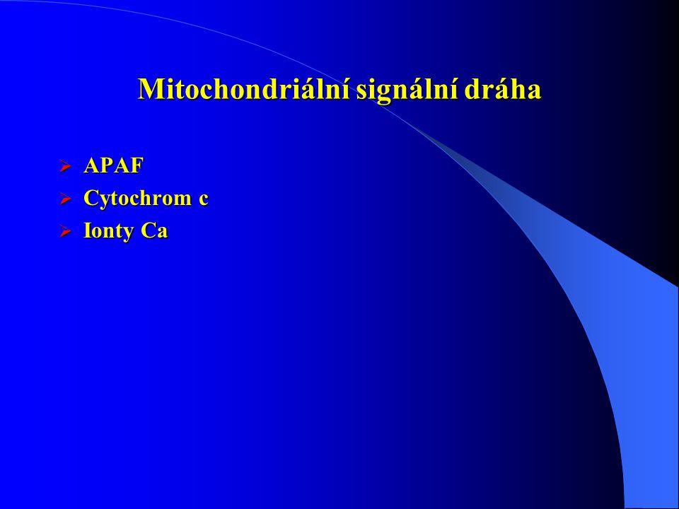 Mitochondriální signální dráha  APAF  Cytochrom c  Ionty Ca