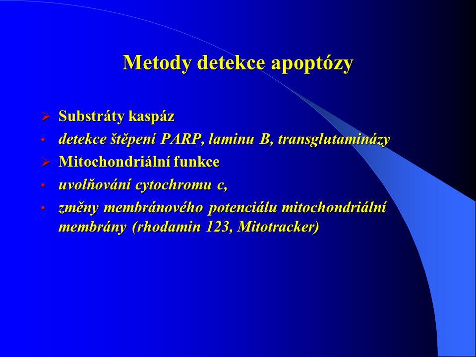 Metody detekce apoptózy  Substráty kaspáz detekce štěpení PARP, laminu B, transglutaminázy detekce štěpení PARP, laminu B, transglutaminázy  Mitochondriální funkce uvolňování cytochromu c, uvolňování cytochromu c, změny membránového potenciálu mitochondriální membrány (rhodamin 123, Mitotracker) změny membránového potenciálu mitochondriální membrány (rhodamin 123, Mitotracker)