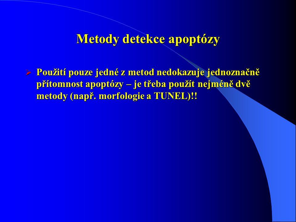 Metody detekce apoptózy  Použití pouze jedné z metod nedokazuje jednoznačně přítomnost apoptózy – je třeba použít nejméně dvě metody (např. morfologi