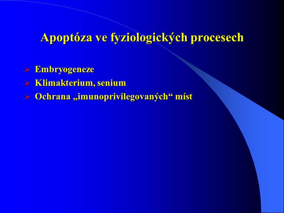 """Apoptóza ve fyziologických procesech  Embryogeneze  Klimakterium, senium  Ochrana """"imunoprivilegovaných"""" míst"""
