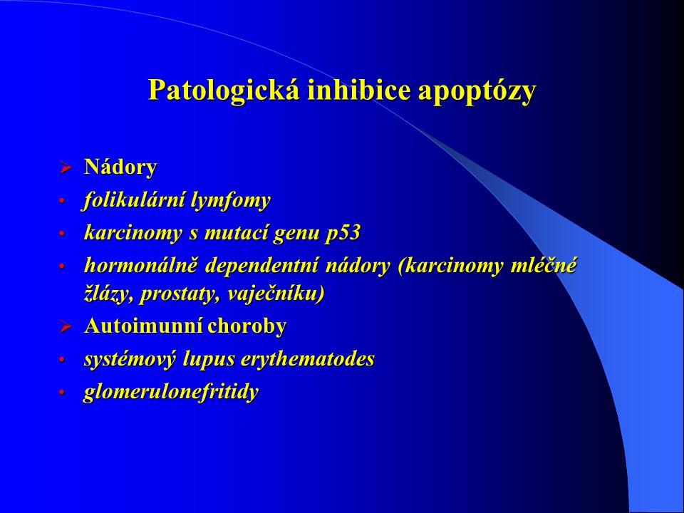 Patologická inhibice apoptózy  Nádory folikulární lymfomy folikulární lymfomy karcinomy s mutací genu p53 karcinomy s mutací genu p53 hormonálně dependentní nádory (karcinomy mléčné žlázy, prostaty, vaječníku) hormonálně dependentní nádory (karcinomy mléčné žlázy, prostaty, vaječníku)  Autoimunní choroby systémový lupus erythematodes systémový lupus erythematodes glomerulonefritidy glomerulonefritidy