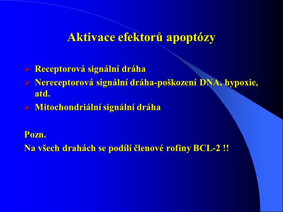 Aktivace efektorů apoptózy  Receptorová signální dráha  Nereceptorová signální dráha-poškození DNA, hypoxie, atd.  Mitochondriální signální dráha P