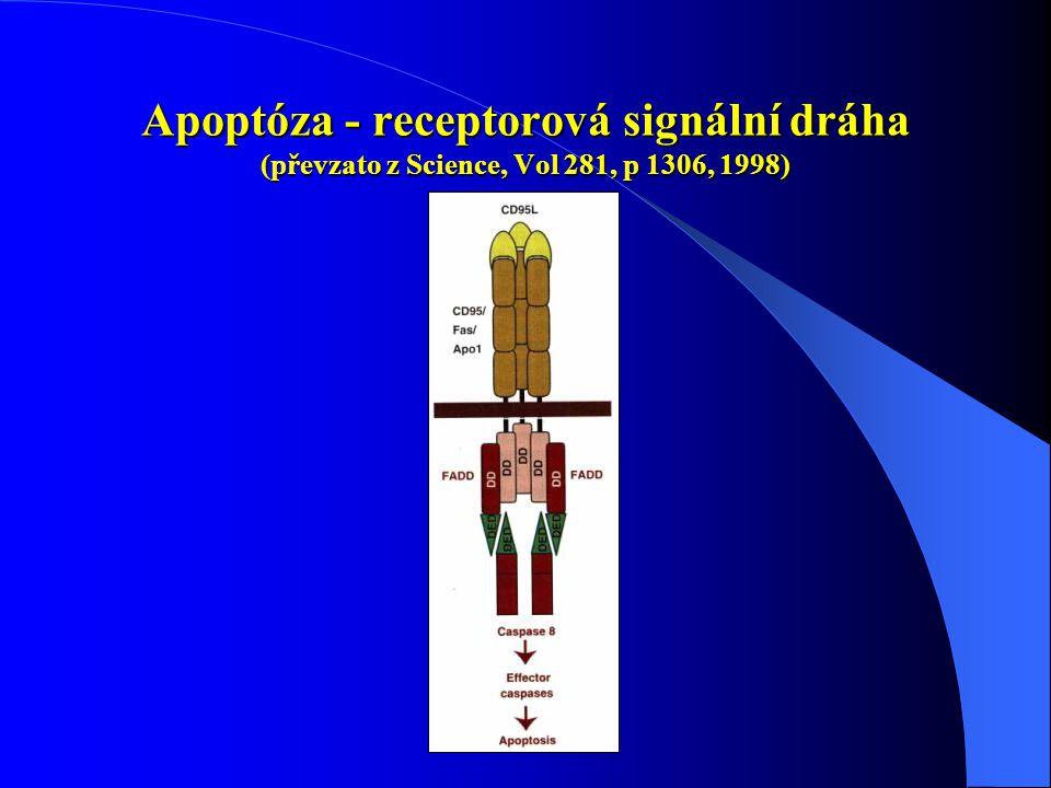Apoptóza - receptorová signální dráha (převzato z Science, Vol 281, p 1306, 1998)