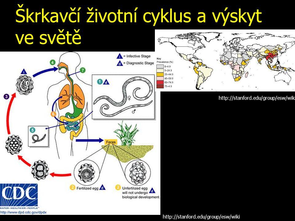 Škrkavčí životní cyklus a výskyt ve světě http://stanford.edu/group/esw/wiki