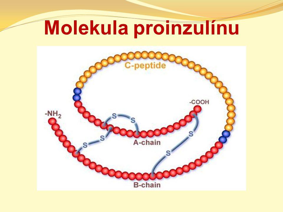 Molekula proinzulínu