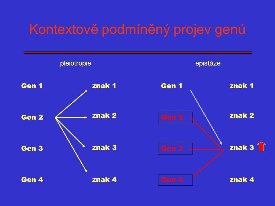 epistáze Kontextově podmíněný projev genů pleiotropie Gen 1 Gen 2 Gen 3 Gen 4 znak 1 znak 2 znak 3 znak 4 Gen 1 Gen 2 Gen 3 Gen 4 znak 1 znak 2 znak 3