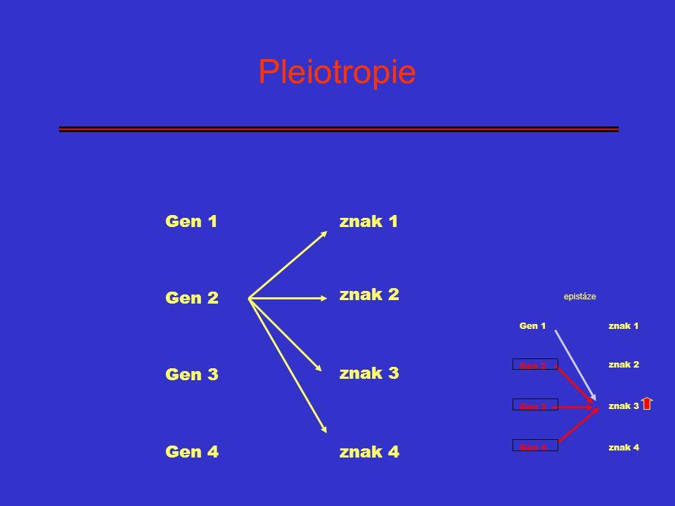 Pleiotropie Gen 1 Gen 2 Gen 3 Gen 4 znak 1 znak 2 znak 3 znak 4 epistáze Gen 1 Gen 2 Gen 3 Gen 4 znak 1 znak 2 znak 3 znak 4