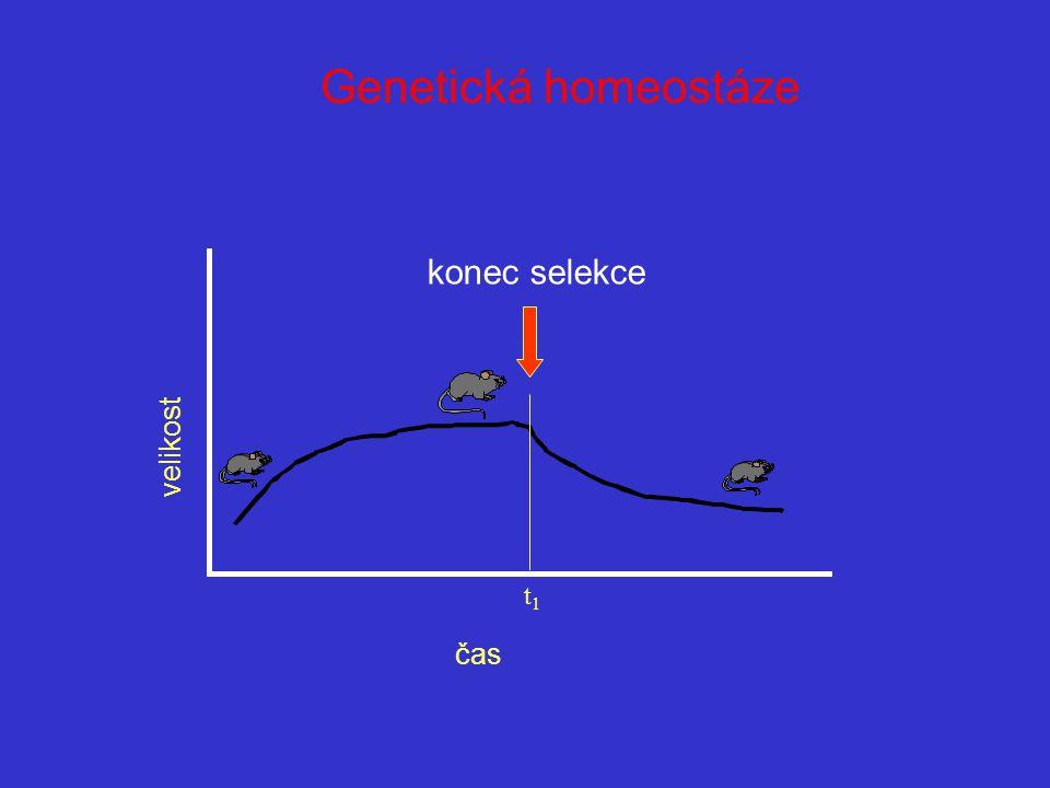 konec selekce t1t1 Genetická homeostáze velikost čas