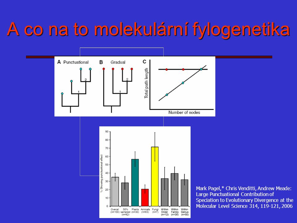 A co na to molekulární fylogenetika Mark Pagel,* Chris Venditti, Andrew Meade: Large Punctuational Contribution of Speciation to Evolutionary Divergen