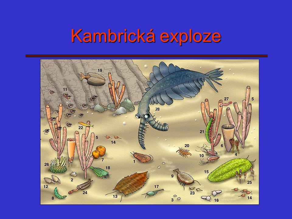 Kambrická exploze