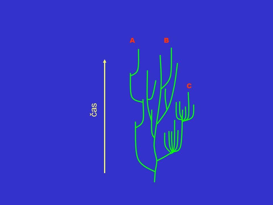 Trendy Obecné trendy –Copeho pravidlo – zvětšování (původně i specializace) –Willistonovo pravidlo – zmenšování počtu článků a jejich diferenciace –fáze spinizace – předchází vymření linie Specifické trendy (redukce prstů o koňů) Zdroje trendů –efekt zdi –statistický artefakt (testování mnoha znaků) –reálné evoluční procesy