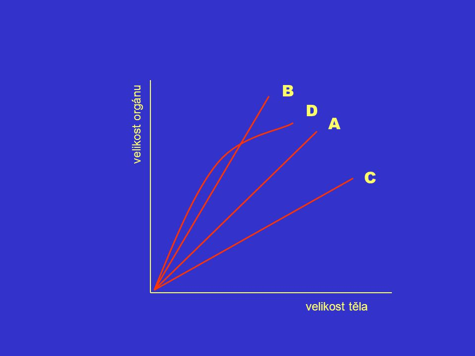 B A C velikost orgánu velikost těla D