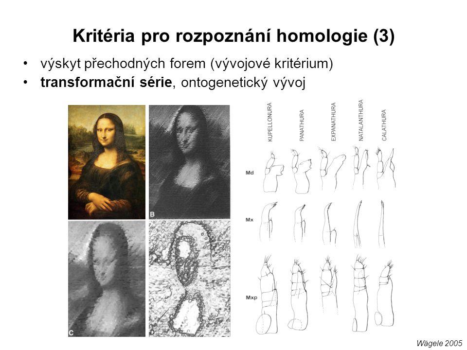 výskyt přechodných forem (vývojové kritérium) transformační série, ontogenetický vývoj Kritéria pro rozpoznání homologie (3) Wägele 2005