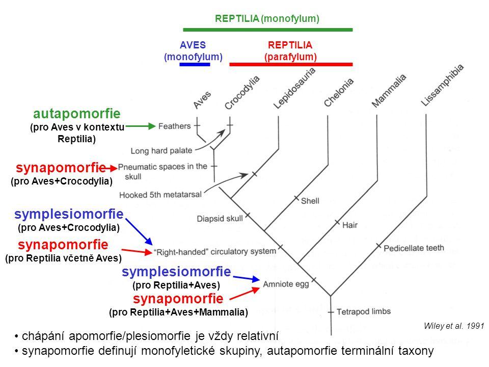 REPTILIA (parafylum) AVES (monofylum) REPTILIA (monofylum) autapomorfie (pro Aves v kontextu Reptilia) synapomorfie (pro Aves+Crocodylia) symplesiomor