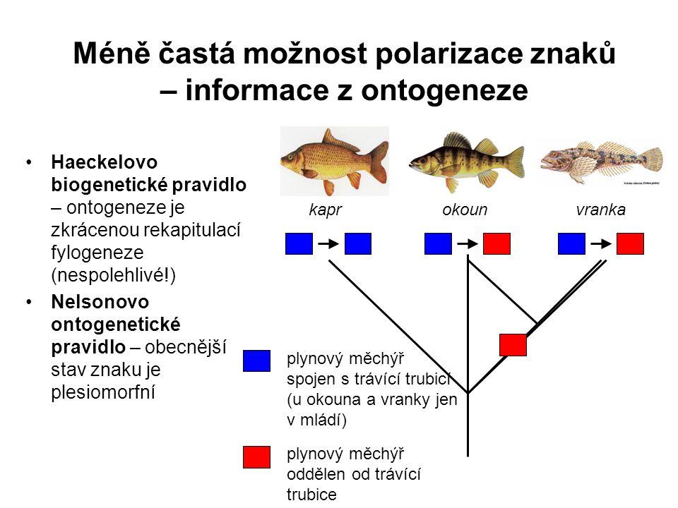 Méně častá možnost polarizace znaků – informace z ontogeneze Haeckelovo biogenetické pravidlo – ontogeneze je zkrácenou rekapitulací fylogeneze (nespo