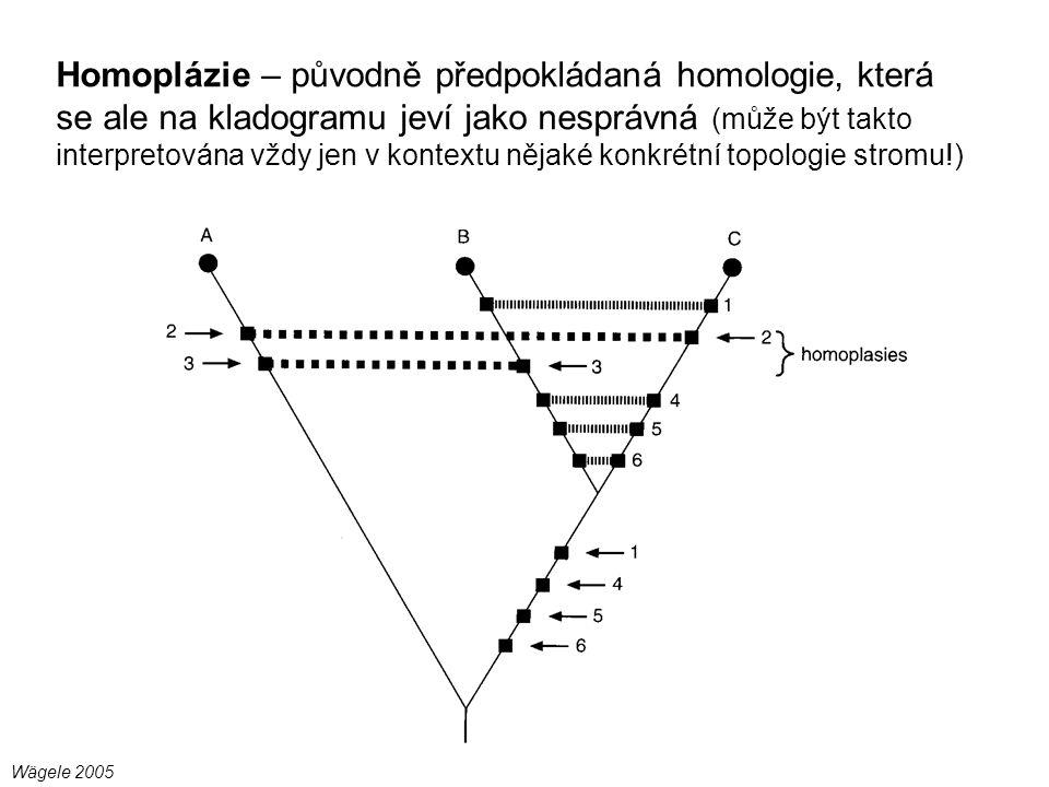 Homoplázie – původně předpokládaná homologie, která se ale na kladogramu jeví jako nesprávná (může být takto interpretována vždy jen v kontextu nějaké