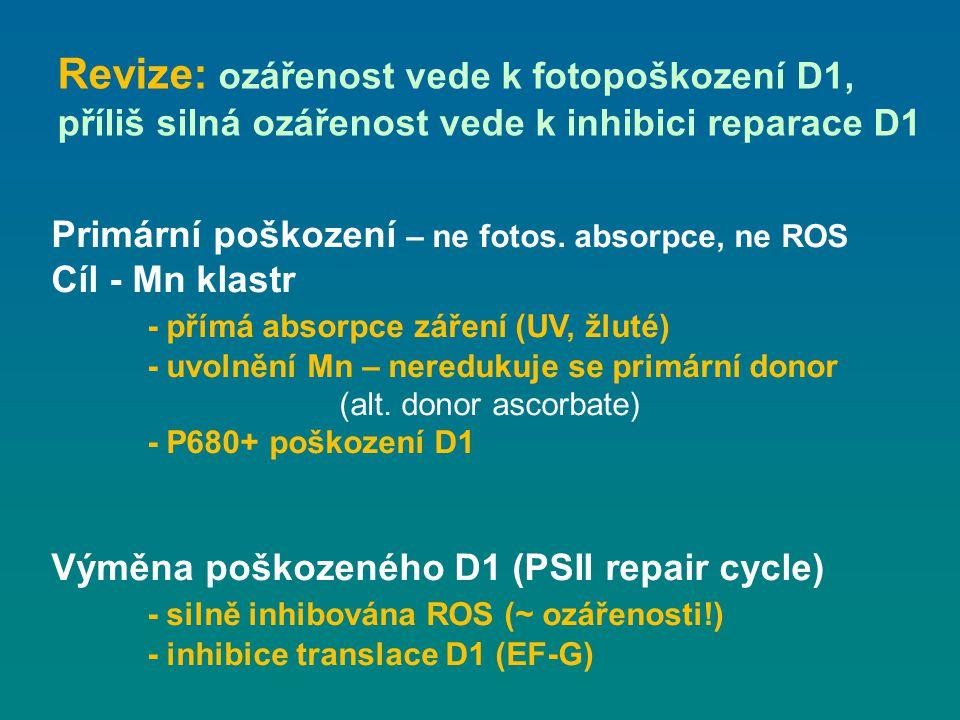 Revize: ozářenost vede k fotopoškození D1, příliš silná ozářenost vede k inhibici reparace D1 Primární poškození – ne fotos. absorpce, ne ROS Cíl - Mn