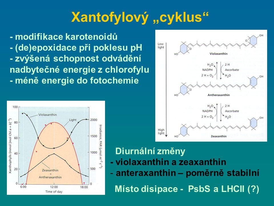 - modifikace karotenoidů - (de)epoxidace při poklesu pH - zvýšená schopnost odvádění nadbytečné energie z chlorofylu - méně energie do fotochemie Diur