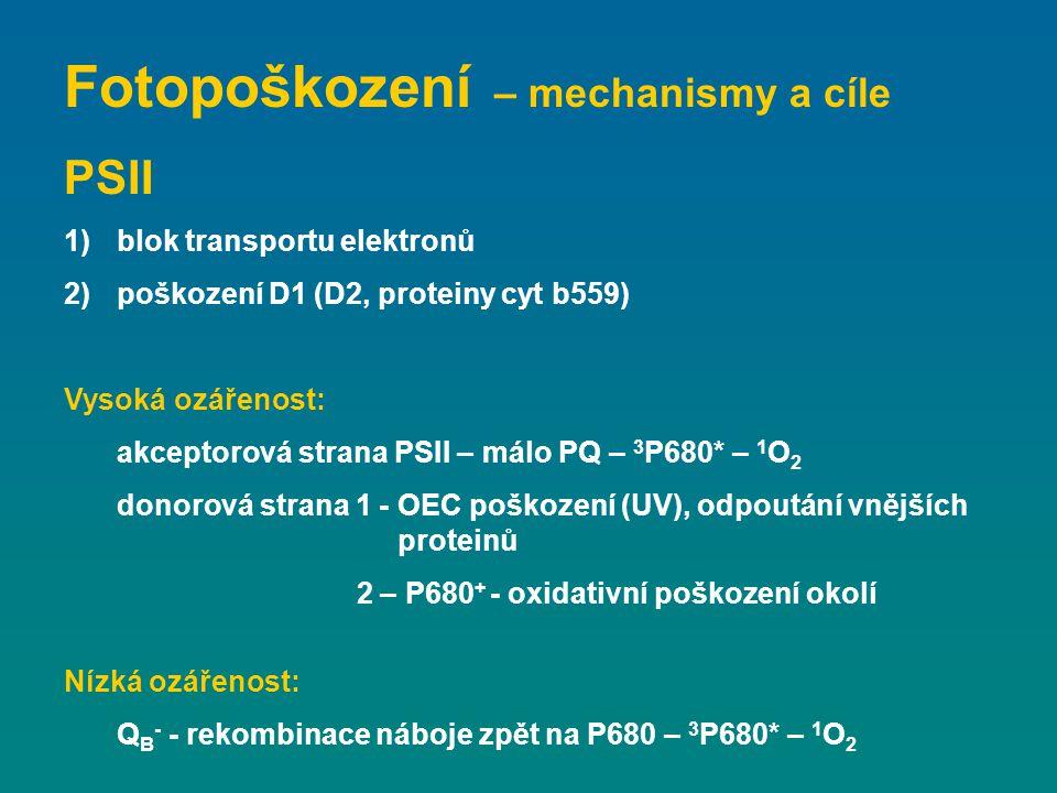 Fotopoškození – mechanismy a cíle PSII 1)blok transportu elektronů 2)poškození D1 (D2, proteiny cyt b559) Vysoká ozářenost: akceptorová strana PSII –