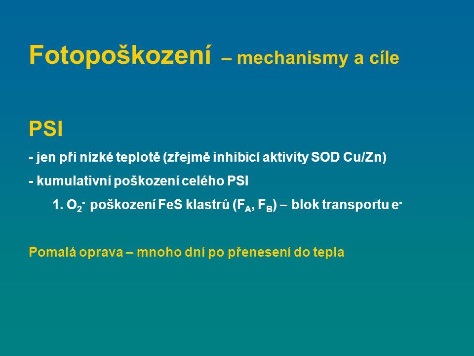 Odbourání 1.fosforylace proteinů PSII (STN8, příp.