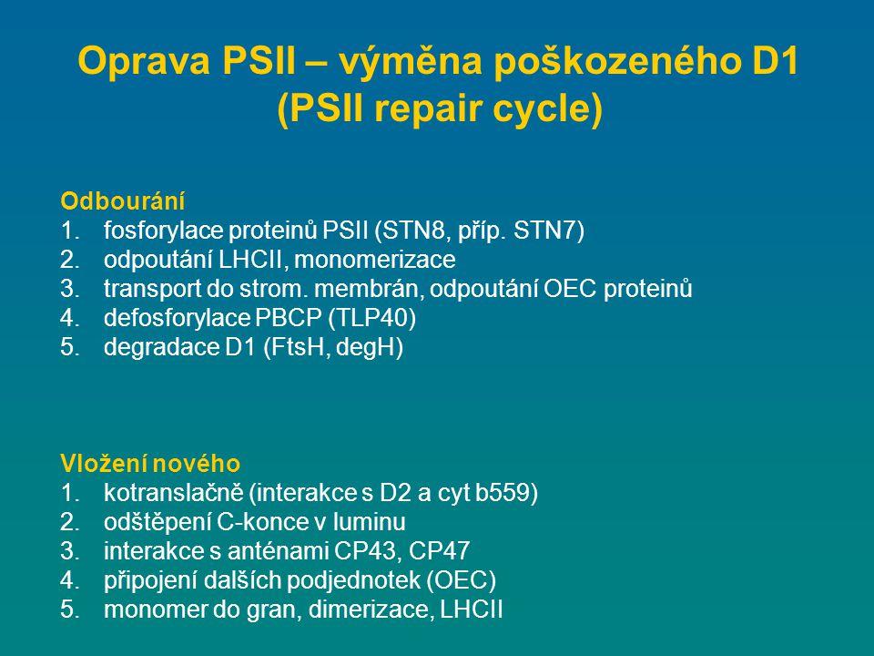 Odbourání 1.fosforylace proteinů PSII (STN8, příp. STN7) 2.odpoutání LHCII, monomerizace 3.transport do strom. membrán, odpoutání OEC proteinů 4.defos