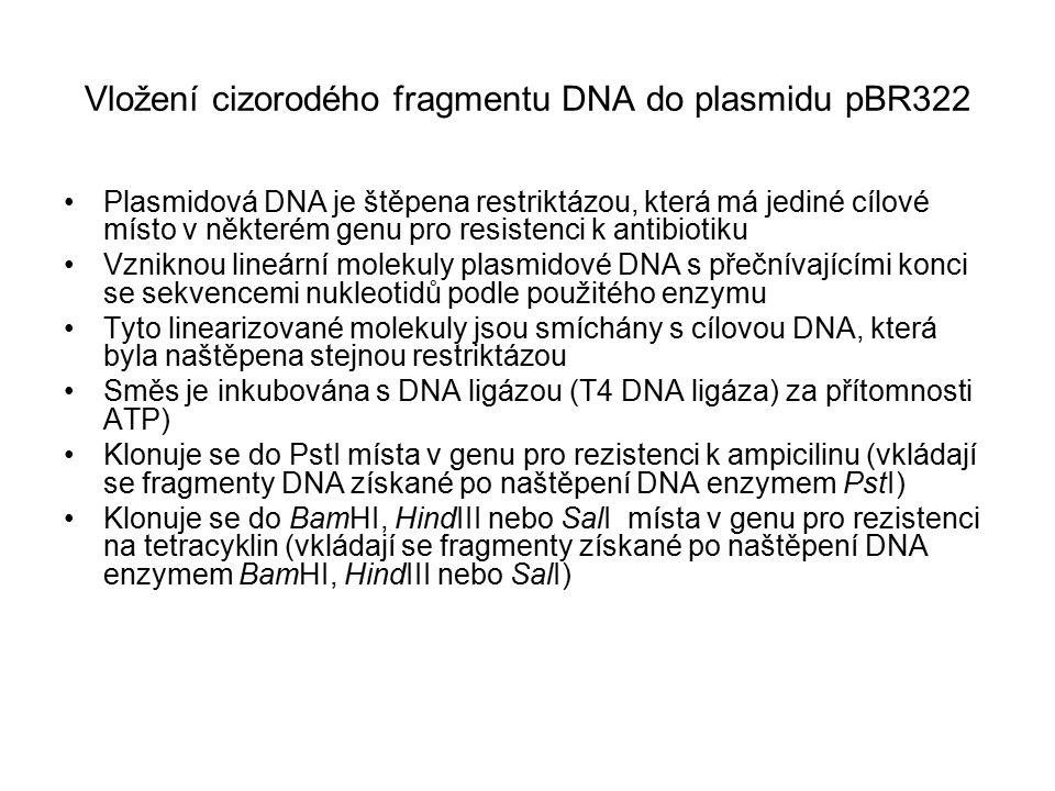 Vložení cizorodého fragmentu DNA do plasmidu pBR322 Plasmidová DNA je štěpena restriktázou, která má jediné cílové místo v některém genu pro resistenc
