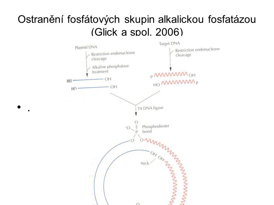 Ostranění fosfátových skupin alkalickou fosfatázou (Glick a spol. 2006).
