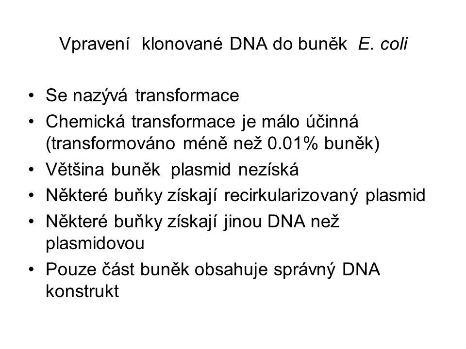 Vpravení klonované DNA do buněk E. coli Se nazývá transformace Chemická transformace je málo účinná (transformováno méně než 0.01% buněk) Většina buně