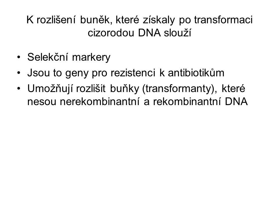 K rozlišení buněk, které získaly po transformaci cizorodou DNA slouží Selekční markery Jsou to geny pro rezistenci k antibiotikům Umožňují rozlišit bu