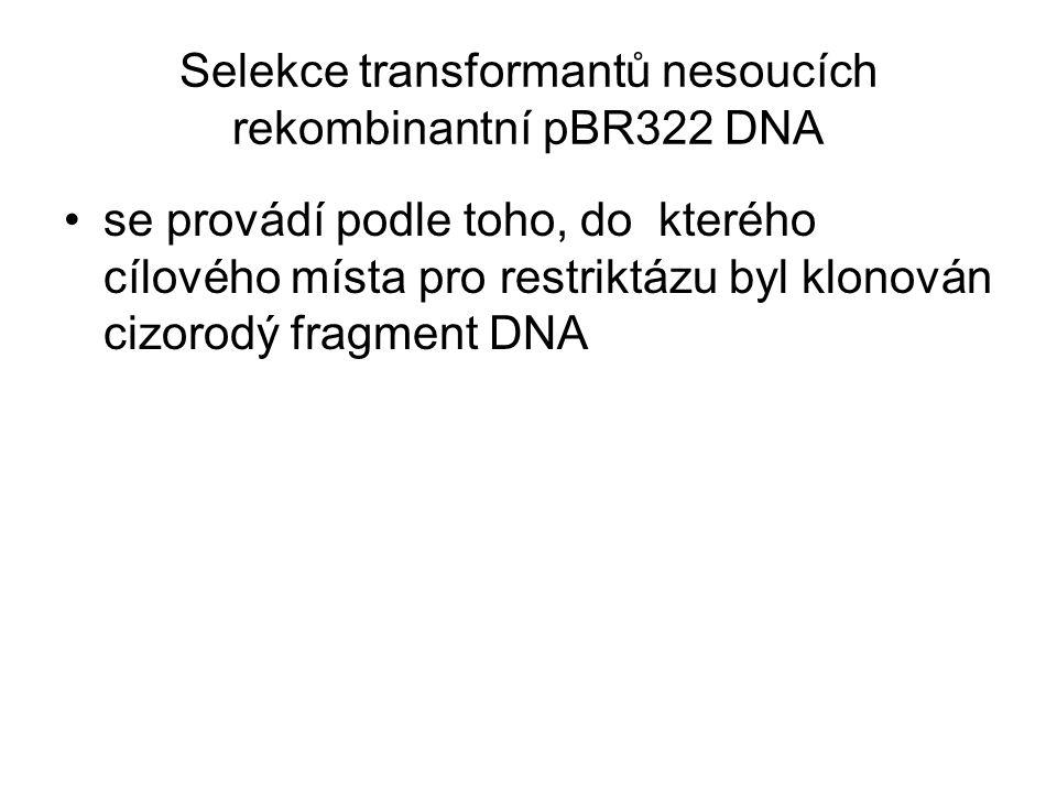 Selekce transformantů nesoucích rekombinantní pBR322 DNA se provádí podle toho, do kterého cílového místa pro restriktázu byl klonován cizorodý fragme