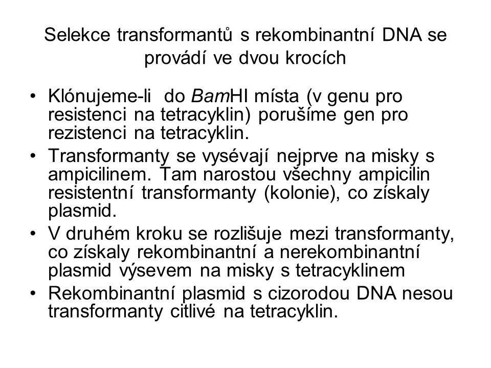 Selekce transformantů s rekombinantní DNA se provádí ve dvou krocích Klónujeme-li do BamHI místa (v genu pro resistenci na tetracyklin) porušíme gen p