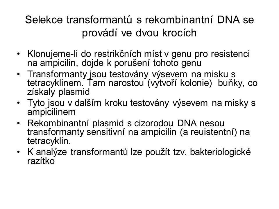 Selekce transformantů s rekombinantní DNA se provádí ve dvou krocích Klonujeme-li do restrikčních míst v genu pro resistenci na ampicilin, dojde k por