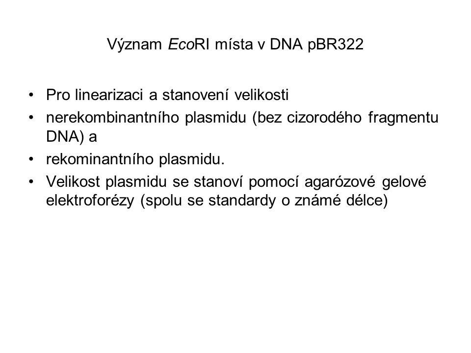 Význam EcoRI místa v DNA pBR322 Pro linearizaci a stanovení velikosti nerekombinantního plasmidu (bez cizorodého fragmentu DNA) a rekominantního plasm