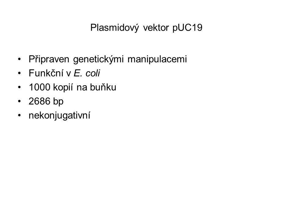 Plasmidový vektor pUC19 Připraven genetickými manipulacemi Funkční v E. coli 1000 kopií na buňku 2686 bp nekonjugativní