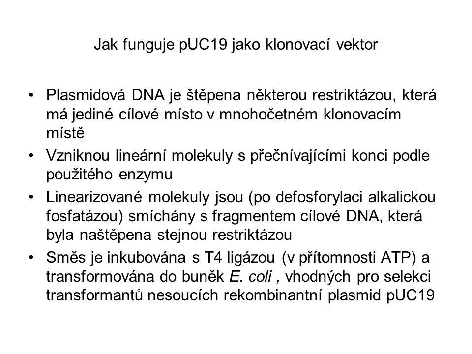 Jak funguje pUC19 jako klonovací vektor Plasmidová DNA je štěpena některou restriktázou, která má jediné cílové místo v mnohočetném klonovacím místě V