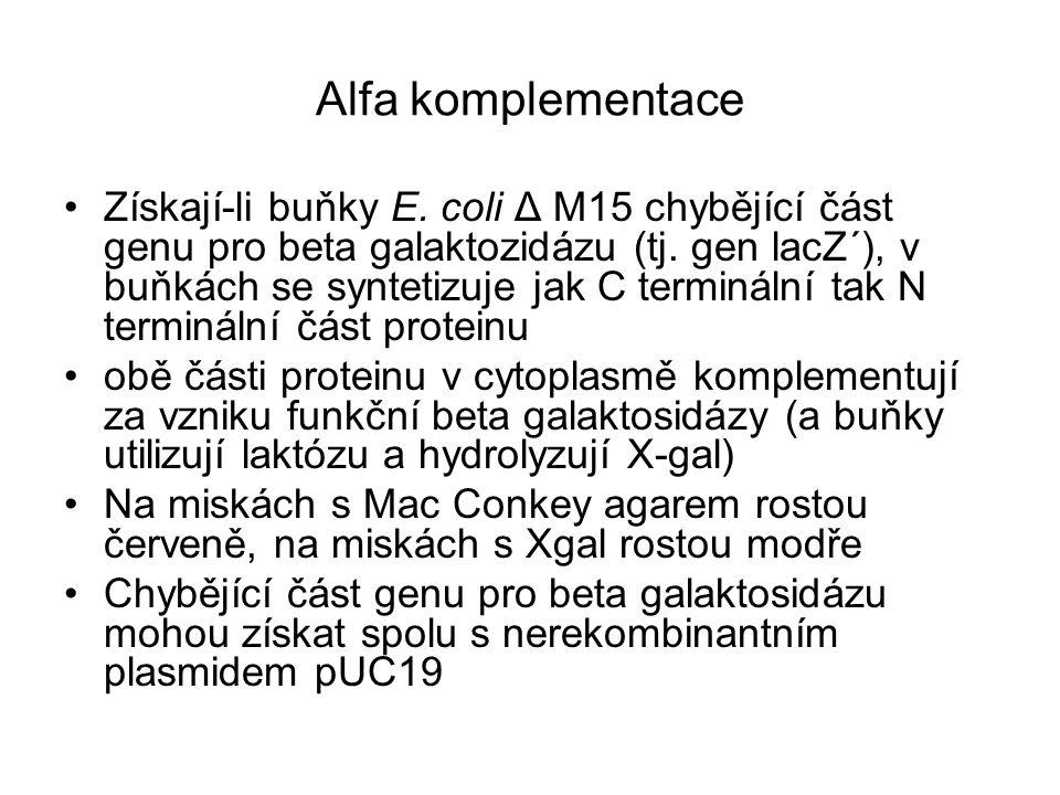 Alfa komplementace Získají-li buňky E. coli Δ M15 chybějící část genu pro beta galaktozidázu (tj. gen lacZ´), v buňkách se syntetizuje jak C termináln