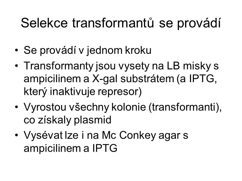 Selekce transformantů se provádí Se provádí v jednom kroku Transformanty jsou vysety na LB misky s ampicilinem a X-gal substrátem (a IPTG, který inakt