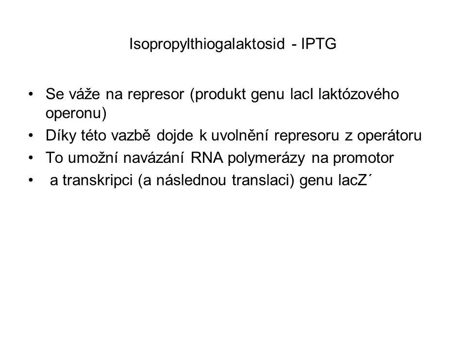 Isopropylthiogalaktosid - IPTG Se váže na represor (produkt genu lacI laktózového operonu) Díky této vazbě dojde k uvolnění represoru z operátoru To u