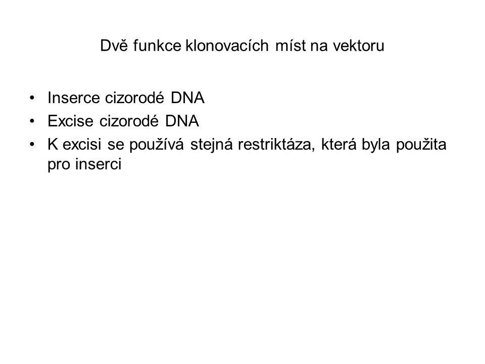 Dvě funkce klonovacích míst na vektoru Inserce cizorodé DNA Excise cizorodé DNA K excisi se používá stejná restriktáza, která byla použita pro inserci