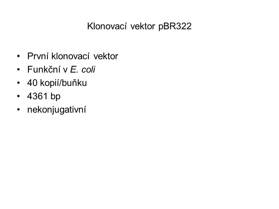 Klonovací vektor pBR322 První klonovací vektor Funkční v E. coli 40 kopií/buňku 4361 bp nekonjugativní