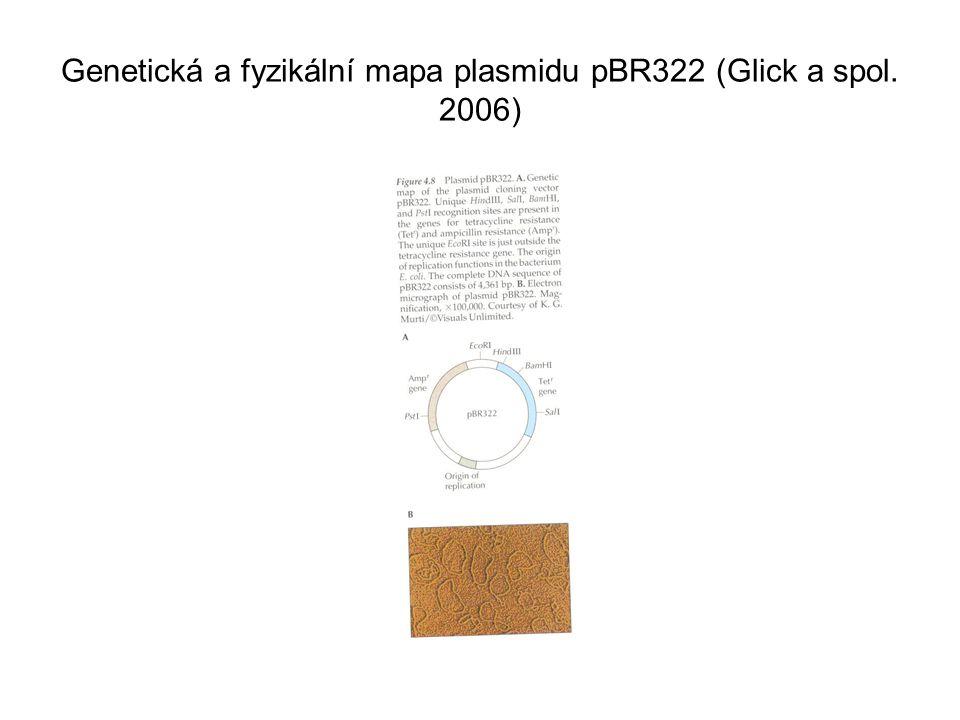 Genetická a fyzikální mapa plasmidu pBR322 (Glick a spol. 2006)