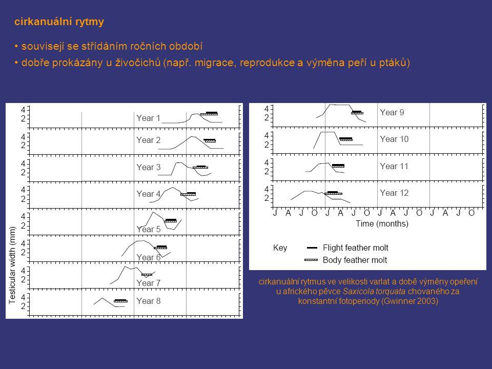 cirkanuální rytmy souvisejí se střídáním ročních období dobře prokázány u živočichů (např. migrace, reprodukce a výměna peří u ptáků) cirkanuální rytm