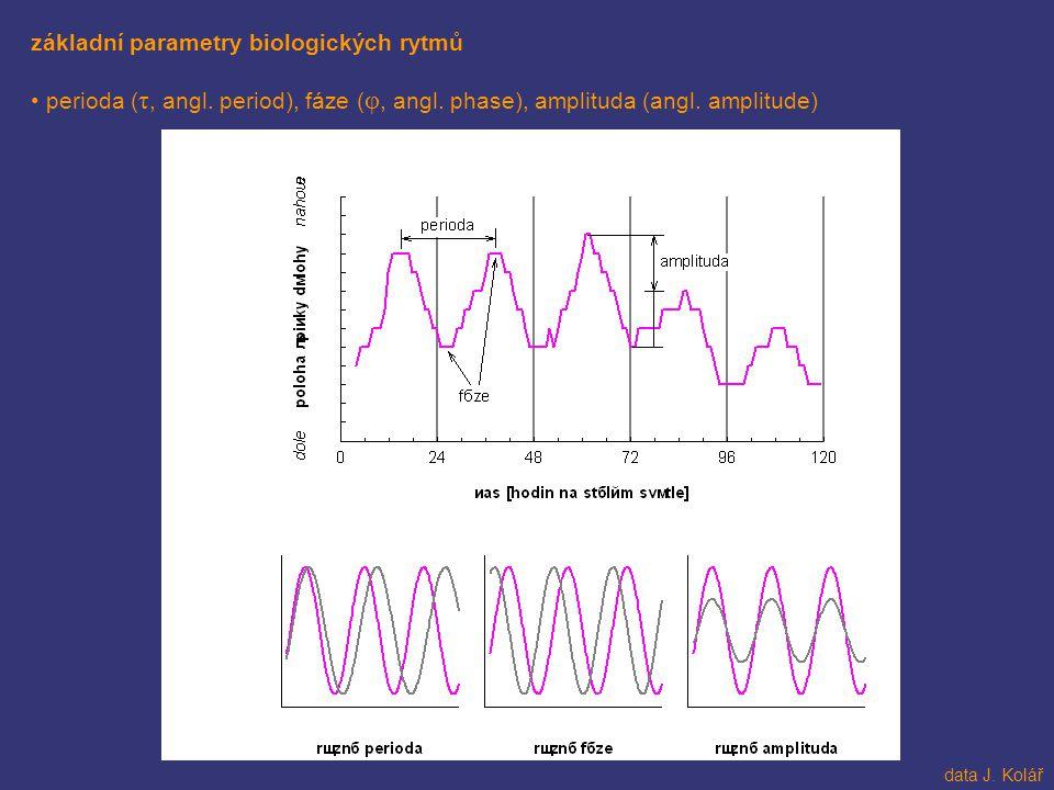 základní parametry biologických rytmů perioda ( τ, angl. period), fáze ( φ, angl. phase), amplituda (angl. amplitude) data J. Kolář