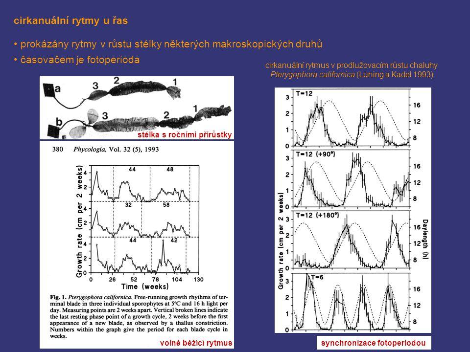 cirkanuální rytmy u řas prokázány rytmy v růstu stélky některých makroskopických druhů časovačem je fotoperioda cirkanuální rytmus v prodlužovacím růs