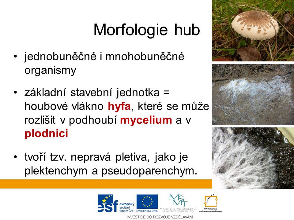 Morfologie hub jednobuněčné i mnohobuněčné organismy základní stavební jednotka = houbové vlákno hyfa, které se může rozlišit v podhoubí mycelium a v plodnici tvoří tzv.