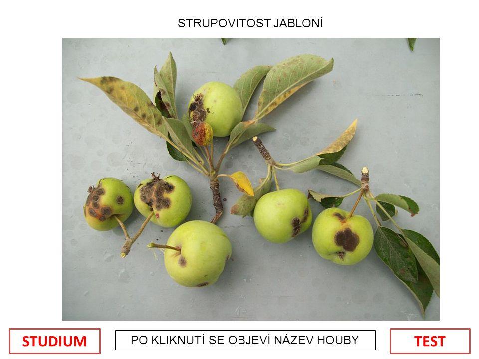 PO KLIKNUTÍ SE OBJEVÍ NÁZEV HOUBY STRUPOVITOST JABLONÍ TESTSTUDIUM